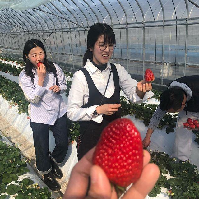 Araki fraises verger