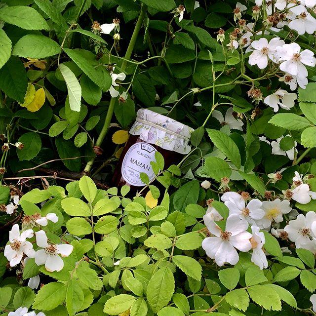 お花の香りを移した3種のジャムがフラベドのラインナップに加わりました。紙蓋はディリジェンスパーラーの越智康貴さんがデザインしたフラワープリント。フラベドパーリゼッタとエンベロープオンラインショップにてお求めいただけます。